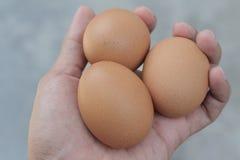 Trzy jajko traw tło Obraz Royalty Free