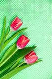 Trzy jaskrawego czerwonego tulipanu na wzorzystości zielenieją tło Obrazy Stock