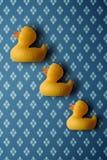 trzy kaczki obrazy stock