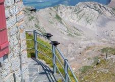 Trzy kawki przy halnym Saentis w Appenzell Alps fotografia stock