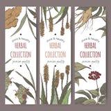 Trzy kolor ziołowej herbaty wektorowej etykietki z imbirem, aloesem i ginseng, Zdjęcie Stock