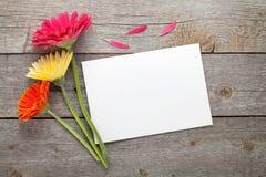 Trzy kolorowego gerbera kwiatu Zdjęcia Stock