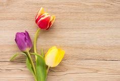 Trzy Kolorowego tulipanu na Brown Drewnianym tle Obraz Stock