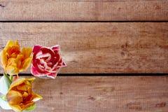 Trzy kolorowego tulipanu na drewnianym stole w wiosny atmosferze Fotografia Stock