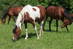 Trzy konia pasa na łące Obrazy Stock