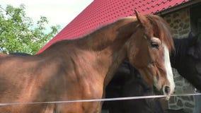 Trzy konia z kierowniczym outside stajenka zbiory wideo