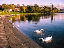 Trzy kordzików zabytek, Stavanger, Norwegia Zdjęcie Royalty Free