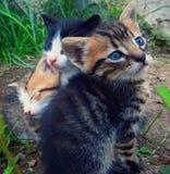 trzy kotki trochę obrazy royalty free