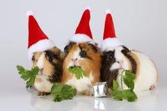 Trzy królika doświadczalnego z Santa kapeluszami Obrazy Stock