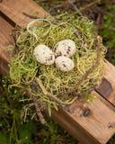 Trzy kremowy i brown jajka w ptaki gniazdują na drewnianej skrzynce Obraz Stock