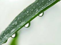 trzy krople deszczu Fotografia Royalty Free