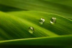Trzy kropli woda na zielonym liść Obrazy Royalty Free