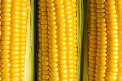 Trzy kukurydzanego ucho Jarzynowy pojęcia tło Zdjęcia Royalty Free
