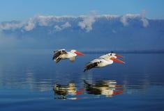 Trzy latającego fishermans Obrazy Royalty Free