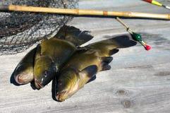 Trzy linu, pławik, prącie i klatka na drewnianej powierzchni, (Tinca tinca) zdjęcia stock