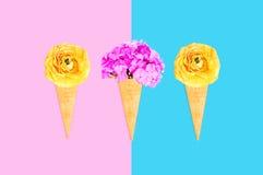 Trzy lody rożek z kwiatami nad różowym błękitnym kolorowym tłem Fotografia Royalty Free
