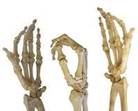 Trzy ludzkiego ręka kośca na bielu obrazy stock