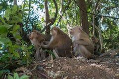 Znalezione obrazy dla zapytania małpy tajlandia dżungla