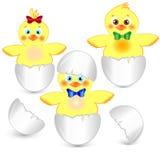 Trzy mały kurczak w jajku Zdjęcia Stock