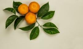 Trzy mandarynki z zielonymi liśćmi zdjęcie stock