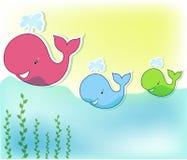 Trzy śmieszny wieloryb w morzu Obrazy Royalty Free