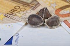 Trzy Moringa ziarna umieszczającego na euro rachunkach Zdjęcie Stock