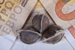 Trzy Moringa ziarna umieszczającego na euro rachunkach Fotografia Stock