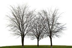 Trzy nagi drzewo na bielu Zdjęcie Royalty Free