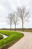 Trzy nagiego drzewa w poboczu Zdjęcie Stock