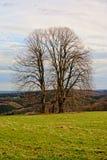 Trzy nagiego zimy drzewa w polu z małym kamienia krzyżem in-between w chmurnym Ardennes krajobrazie, Zdjęcia Royalty Free