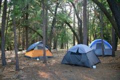 Trzy Namiotów Ustawianie w Bujny Zieleni Drewnach Fotografia Royalty Free