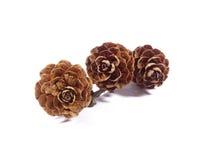 Trzy naturalny suchy kwiat kształtująca sosna konusuje z gałąź odizolowywającą na białym tle Zdjęcie Royalty Free