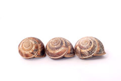 Trzy ogrodowego ślimaczka skorupy Zdjęcia Stock