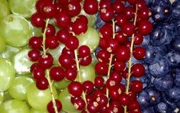 trzy owoce Zdjęcia Stock