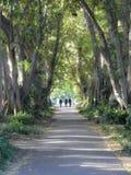 Trzy peope odprowadzenie na drzewnej prążkowanej ścieżce w parku zdjęcia stock