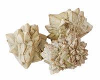 trzy plasterki mineralne Obraz Royalty Free