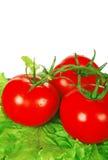 trzy pomidoru Obraz Royalty Free
