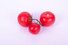 Trzy pomidoru na gałąź odizolowywającej Obraz Royalty Free