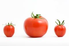 trzy pomidory obraz stock