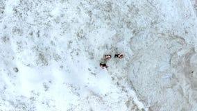 Trzy potomstwa, sportowe kobiety robi rozciąganiu ćwiczą, rozgrzewka, na piaskowatym wierzchołku łup na plaży, świt zbiory wideo