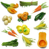 trzy próbnika warzyw obrazy royalty free