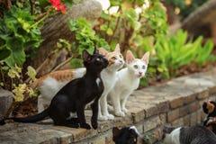 Trzy przybłąkanego kota przy hotelowym kurortem, przyglądającym w górę, czekać na gościa obrazy stock
