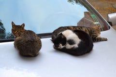 Trzy przybłąkanego kota wygrzewają się na ciepłym kapiszonie ostatnio parkujący samochód na jesień dniu fotografia stock