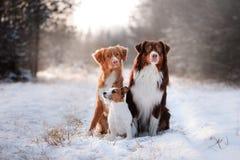 Trzy psa siedzi wpólnie outdoors w śniegu zdjęcie royalty free