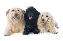 trzy psy obrazy royalty free