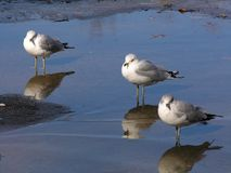 Trzy ptaka Zdjęcia Royalty Free