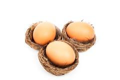 Trzy ptaka gniazdeczka z Wielkanocnym jajkiem w nim Obraz Royalty Free