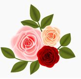 Trzy róż i liści dekoracji ilustracji