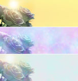 Trzy różnego róża sztandaru Obrazy Royalty Free