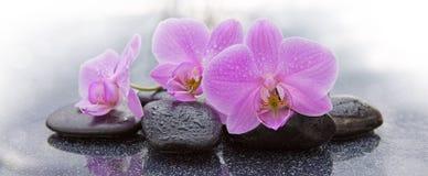 Trzy różowych orchidei i czarnych kamieni zamkniętego up Fotografia Royalty Free